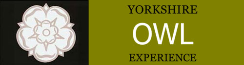 Yorkshire Owl Experience
